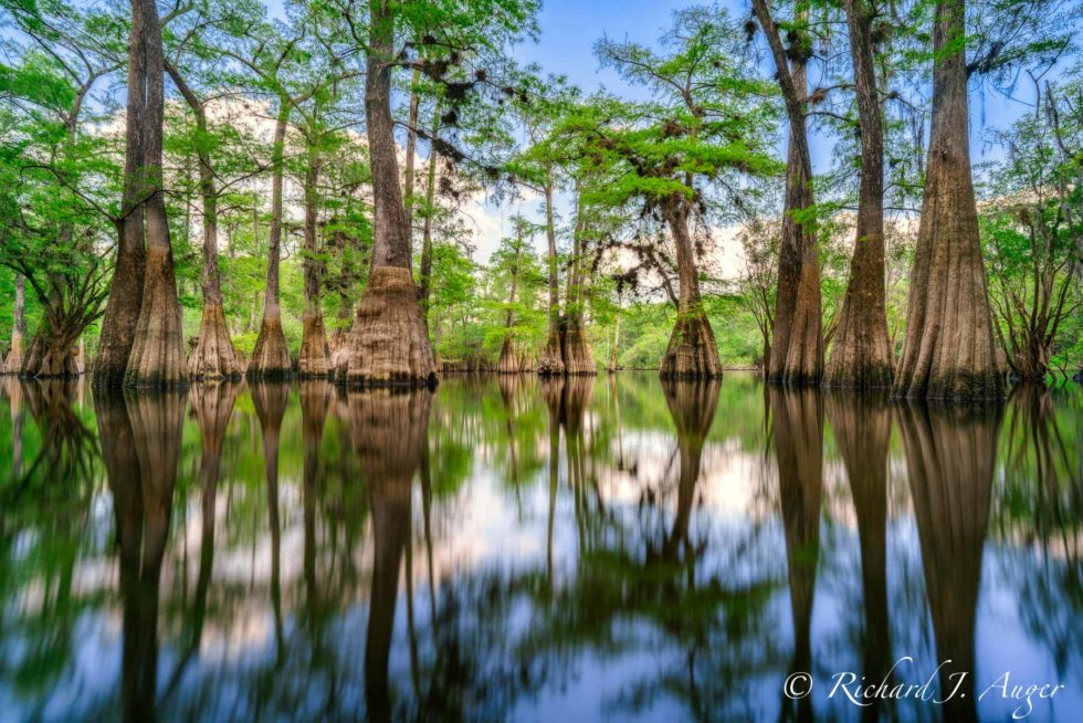Suwannee River, Florida, Panhandle, Cypress, Reflections, Water