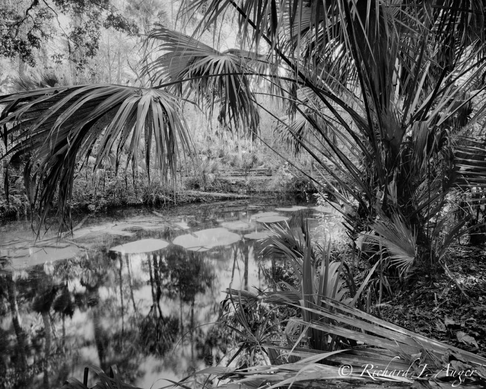 Fern Hammock Springs, Juniper Run, Ocala National Forest, Ocala, Black and White, Vintage