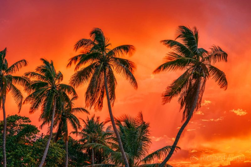 Fire Palms, Bahia Honda, Florida Keys, Brilliant, Sunset