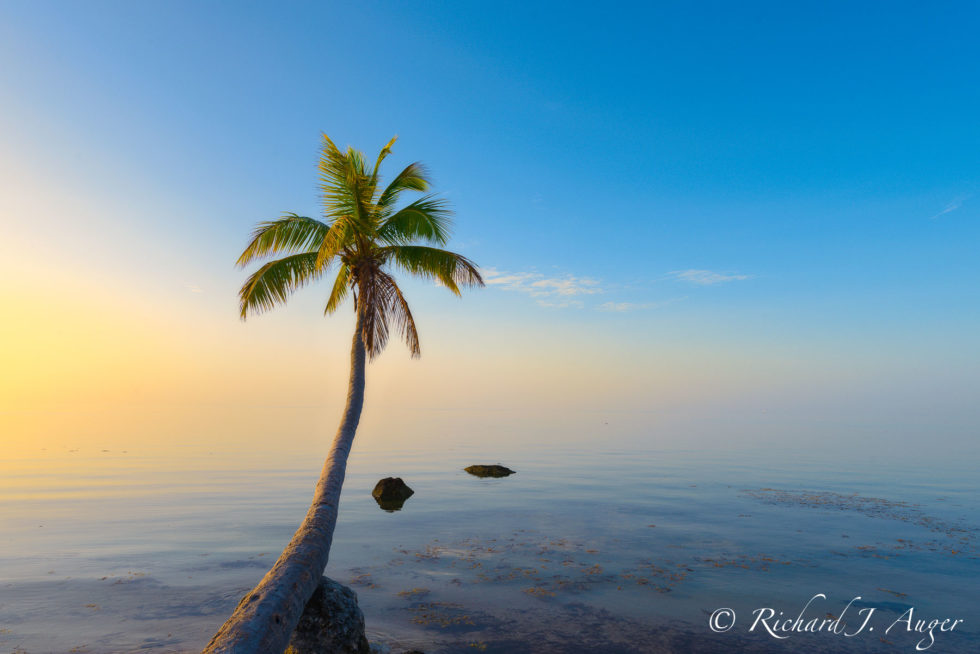Islamorada, Florida Keys, Sunrise, Palm Tree, Ocean, Caribbean, Tropical, Abstract