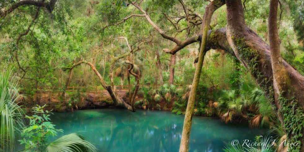 Green Spring, St Johns River, Florida, Longwood, Oak, Swamp, Panorma, Photo, Lanscape, Photographer, Forest