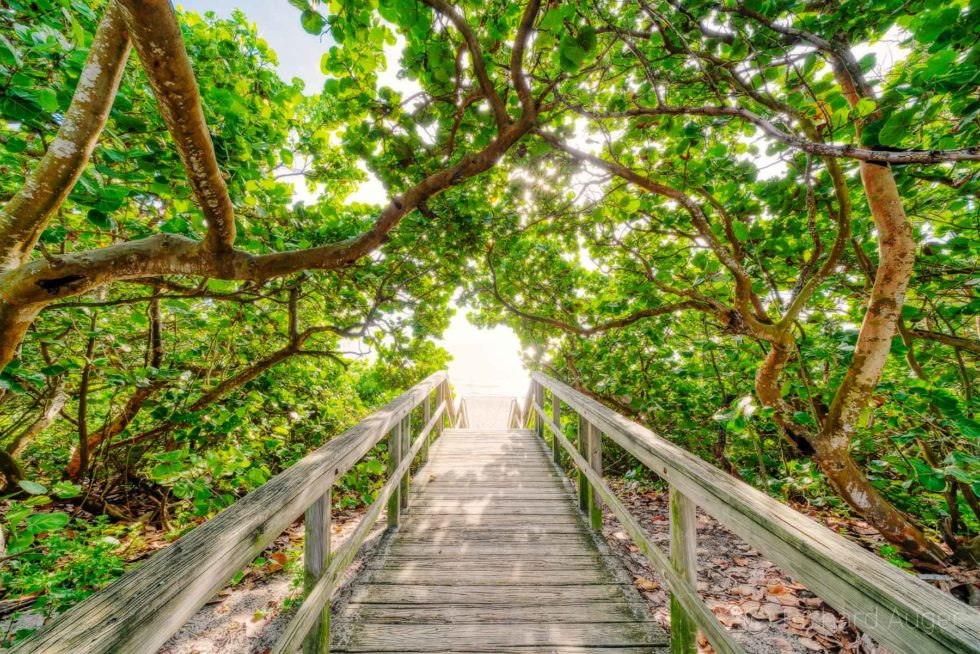 Juno Beach, Florida, Photograph, Landscape, Walkway, Boardwalk