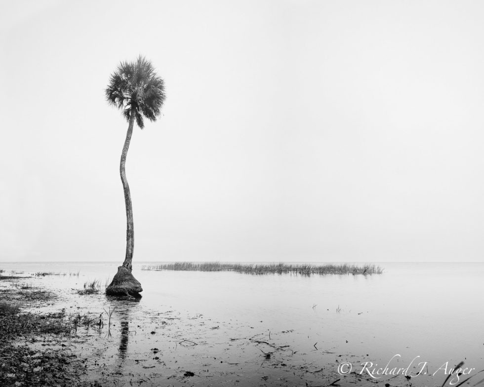 Lake George, Florida, Ocala National Forest, Black White, Fog, Conceptual, Photography, Film, Water, Calm