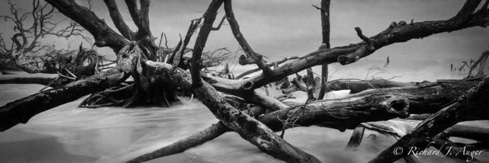 Hunting Island, South Carolina, Driftwood, Black and White, Ocean
