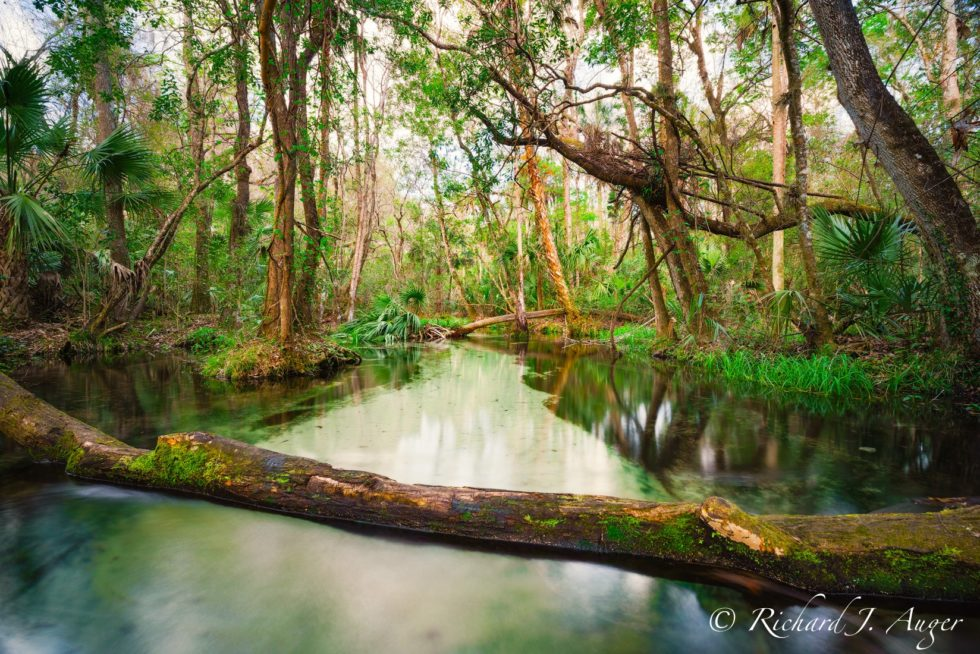 Rainbow River, Dunnellon, Florida, Wild, Creek, River, Swamp, nature