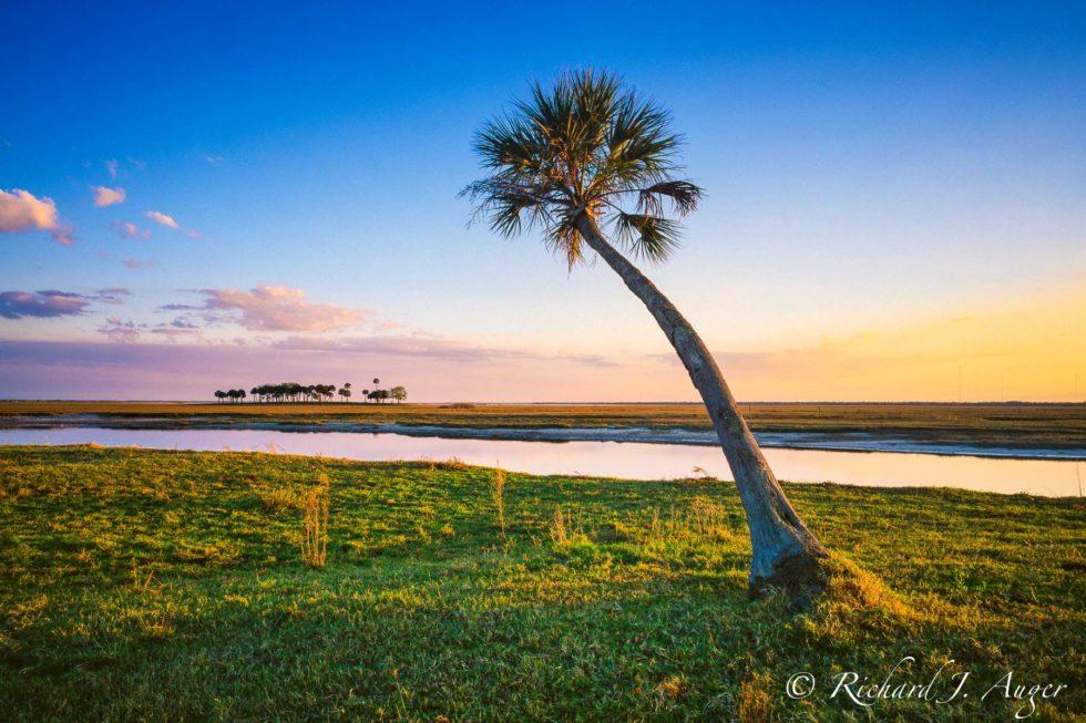 St Johns River, Central Florida, palm tree, evening, sunset, calm, landscape, canvas