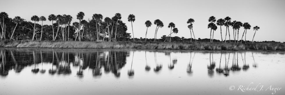 St Johns River, Lake Harney, Florida, Palm Trees, Swamp, Reflections, Water, Panorama, Black and White, Nature, Landscape, Photograph