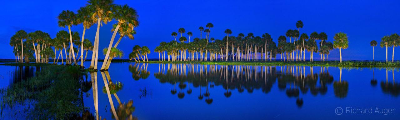 St Johns River, Florida, Panorama, Night, Lighting, Palm Trees, Reflections