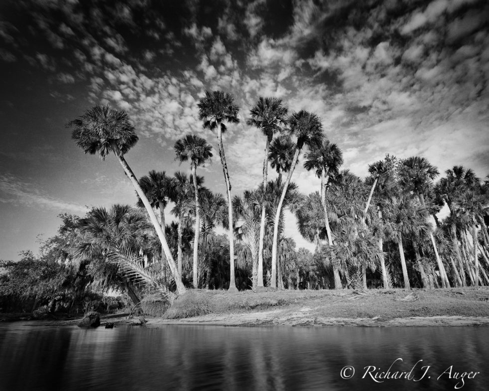 Big Econlockhatchee, St Johns River, Palm Trees, Jungle, Black and White, Swamp, River