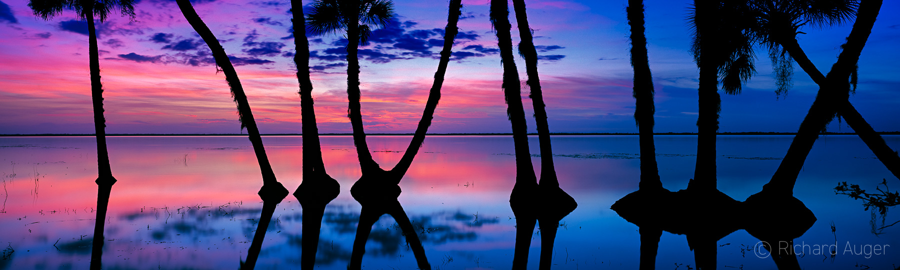 St Johns River, Florida, Lake Harney, Sunset, Silhouette, Palm Trees, Reflections, Water, Panorama, Photograph